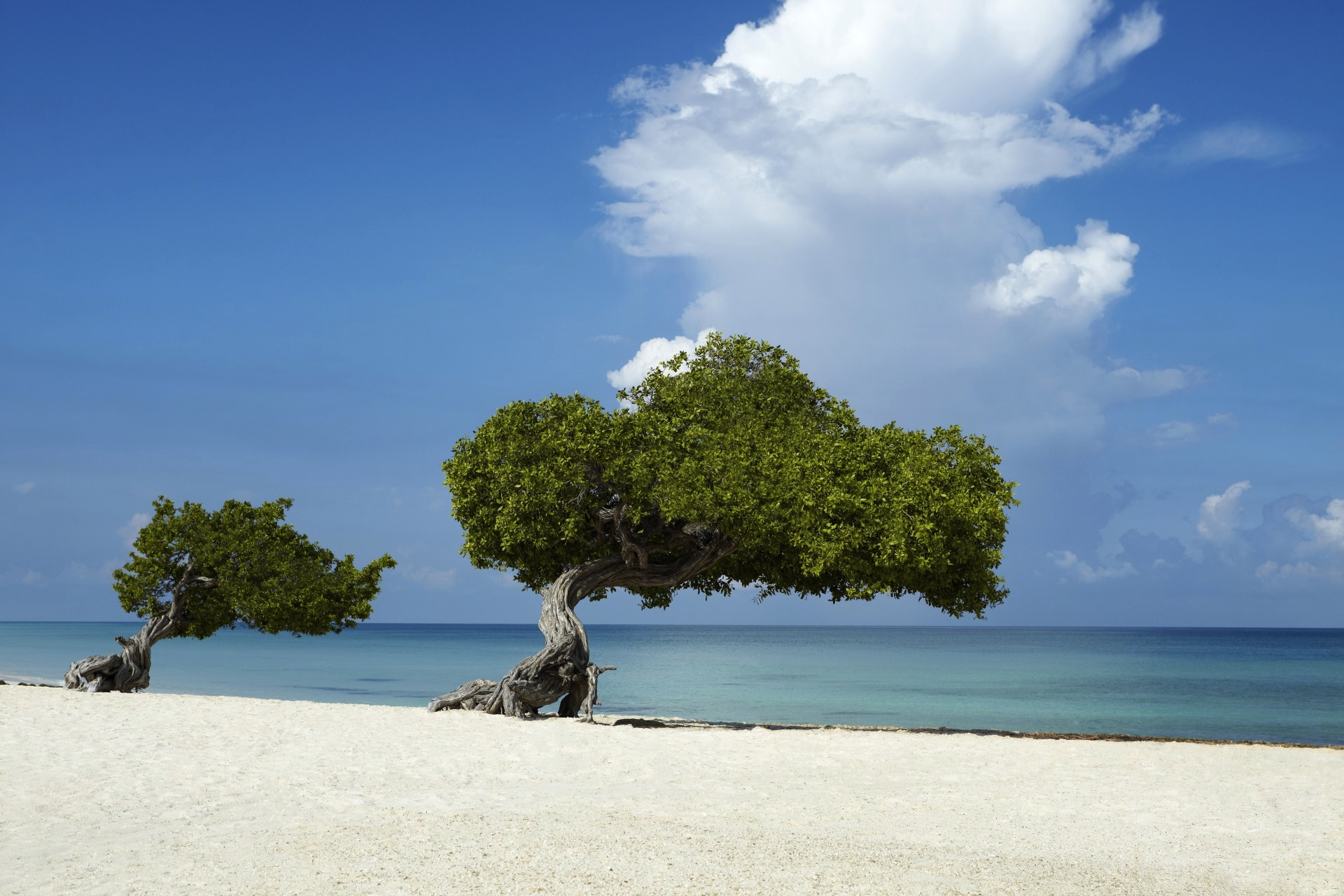 Tree on the beach with sand