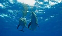 Dolphin Best Friends